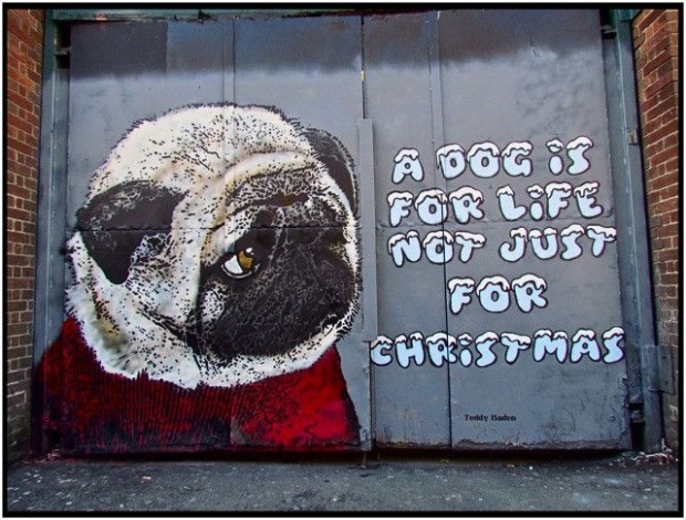 Dog for life not just for christmas