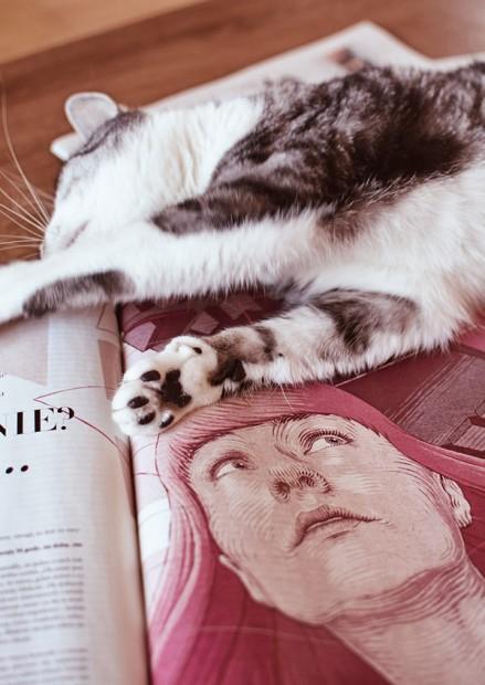 Kitty magazine
